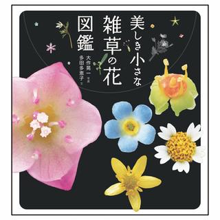 5737web美しき小さな雑草の花枠付き.jpg